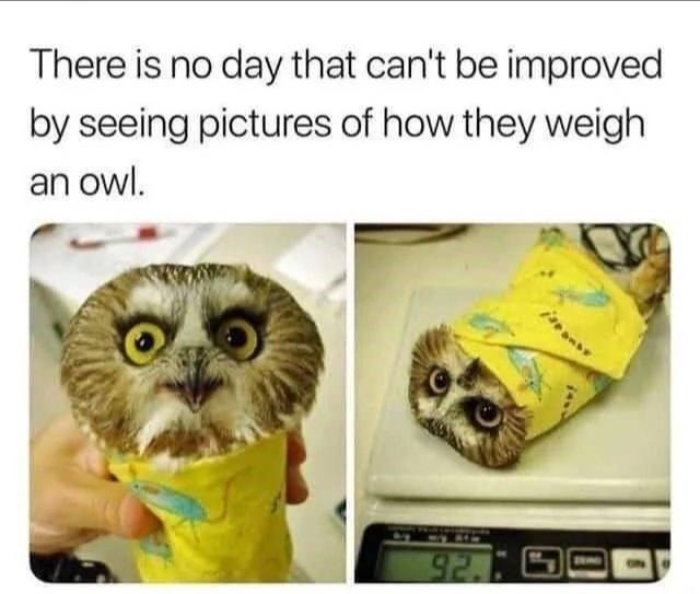 Meme - Owl - There is no day that can't be improved by seeing pictures of how they weigh an owl. 92.