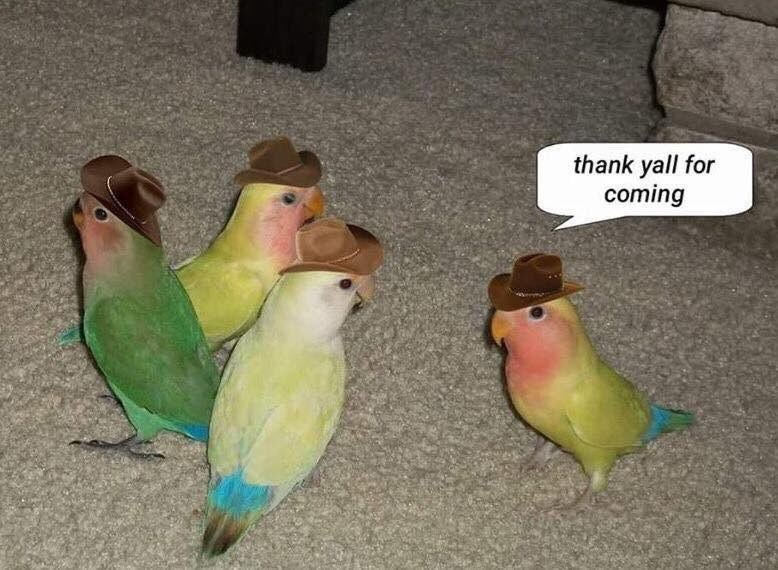 Meme - Bird - thank yall for coming