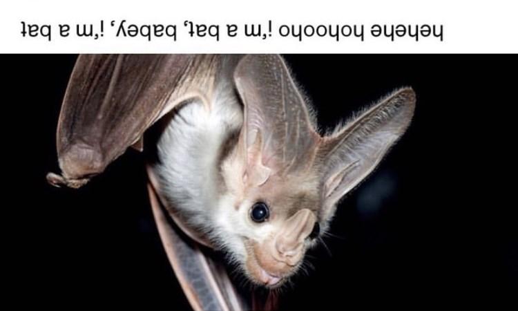 """Meme - """"Hehehe hohooho! I'm a bat, babey! I'm a bat"""""""