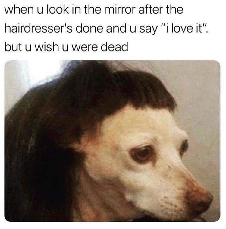 """Meme - Canidae - when u look in the mirror after the hairdresser's done and u say """"i love it"""" but u wish u were dead"""