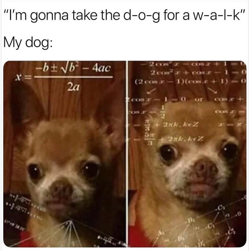"""Meme - Dog - """"I'm gonna take the d-o-g for a w-a-l-k""""    My dog: -bt Nb -4ac 2 co co (2 cos-1(co. x 2a COS or 2Nk keZ 2xk. keZ"""