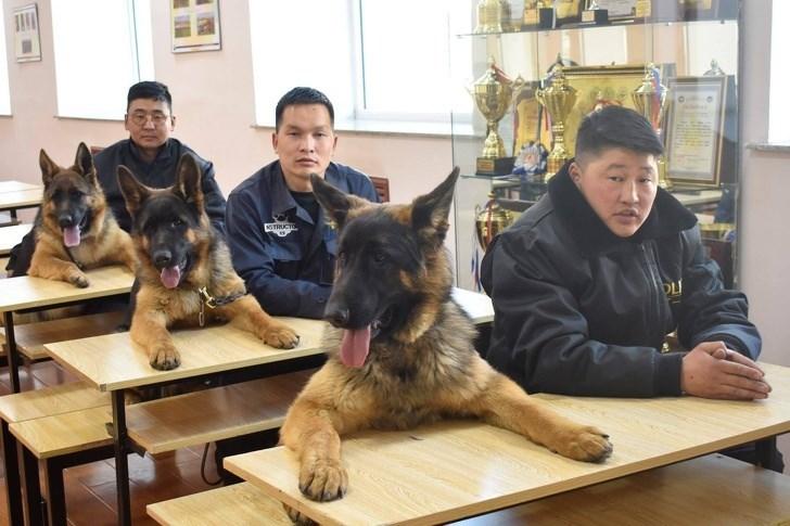 Dog - CoUCTO