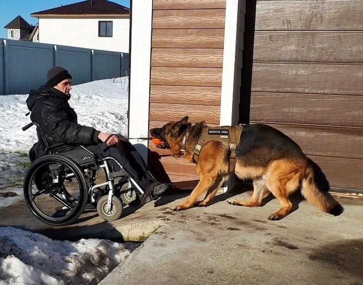 Dog - ENVICE DOG atre