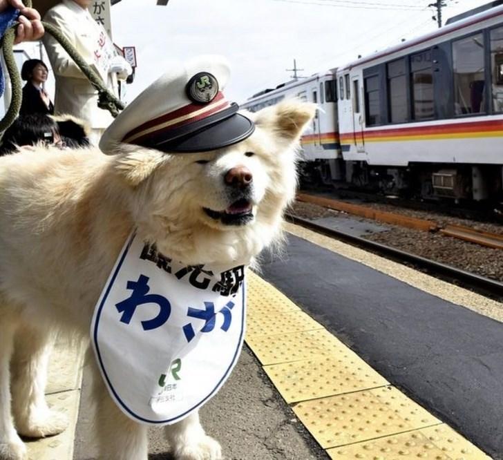Dog - わが