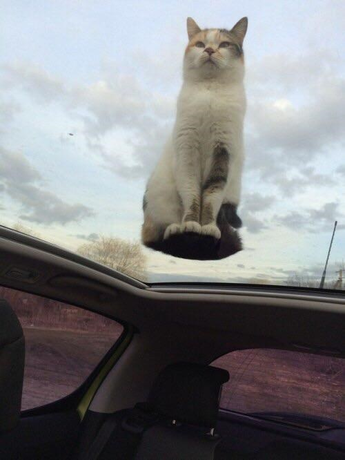 on glass - Cat