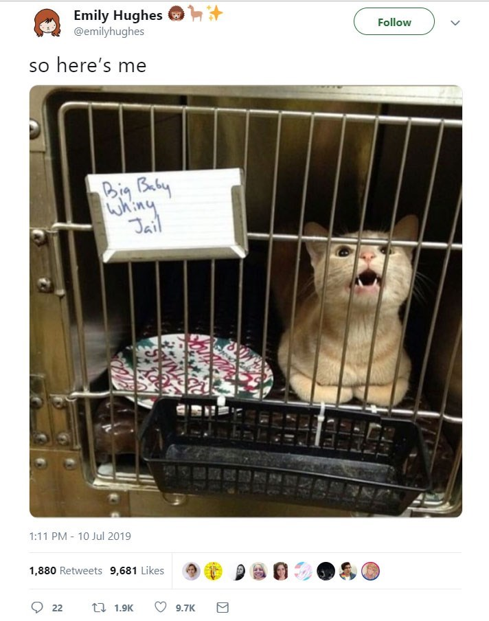 funny women - Ferret - Emily Hughes @emilyhughes Follow so here's me Big Baby WAiny Jail 1:11 PM 10 Jul 2019 1,880 Retweets 9,681 Likes t 1.9K 22 9.7K