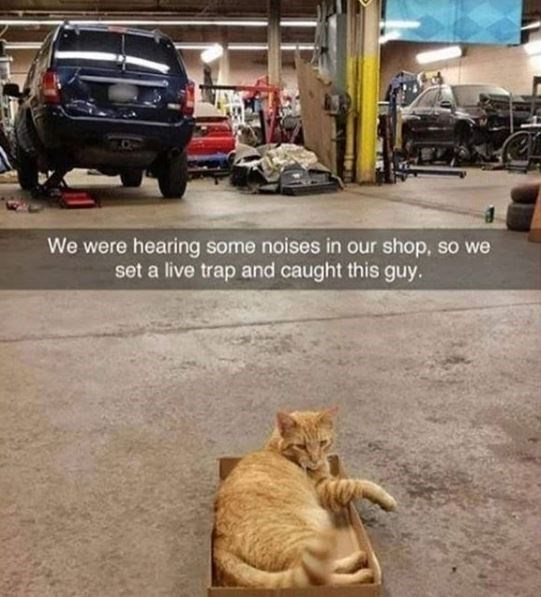 Cat - We were hearing some noises in our shop, so we set a live trap and caught this guy