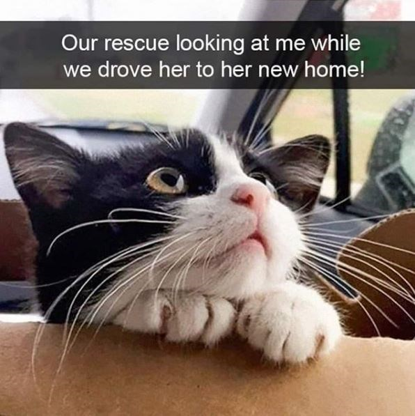 Cat - Our rescue looking at me while drove her to her new home!