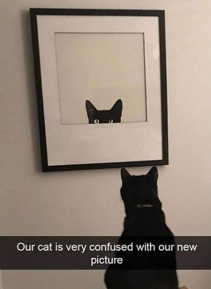 Cat - Our cat is very confused with our new picture