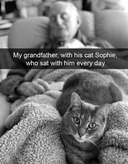 Cat - My grandfather, with his cat Sophie, who sat with him every day.