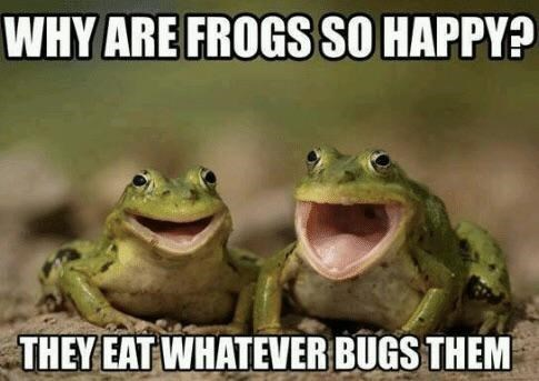 Frog - WHY ARE FROGS SO HAPPY? THEY EAT WHATEVER BUGS THEM