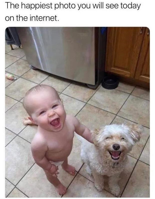 Dog - The happiest photo you will see today on the internet.