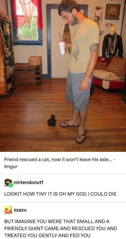 Floor - Friend rescued a cat, now it won't leave his side... Imgur nintendonut1 LOOKIT HOW TINY IT IS OH MY GOD I COULD DIE zzazu BUT IMAGINE YOU WERE THAT SMALLAND A FRIENDLY GIANT CAME AND RESCUED YOU AND TREATED YOU GENTLY AND FED YOU