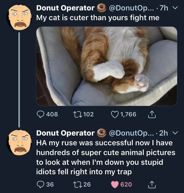 Text - @DonutOp... 7h Donut Operator My cat is cuter than yours fight me 1,766 408 t102 @DonutOp... 2h Donut Operator HA my ruse was successful now I have hundreds of super cute animal pictures to look at when I'm down you stupid idiots fell right into my trap 36 L126 620