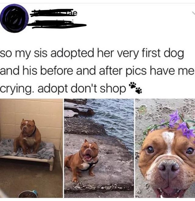 Dog - --ne so my sis adopted her very first dog and his before and after pics have me crying. adopt don't shop