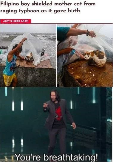Adaptation - Filipino boy shielded mother cat from raging typhoon as it gave birth MOST SHARED POSTS You're breathtaking!