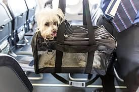 small white fluffy dog inside material carrier on airplane travelling dog meme