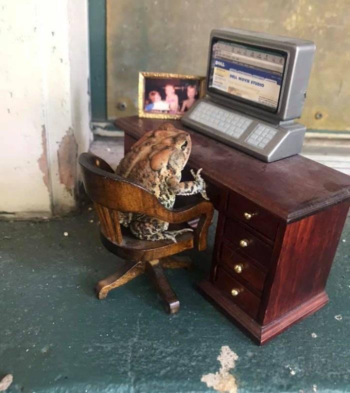 toad dollhouse - Furniture - EL MOVIS STUDIO