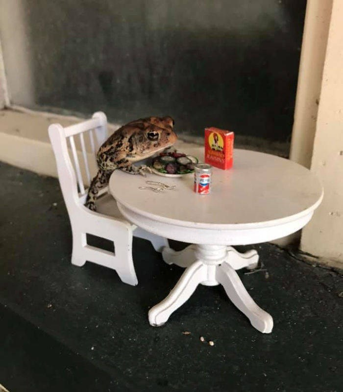 toad dollhouse - Table