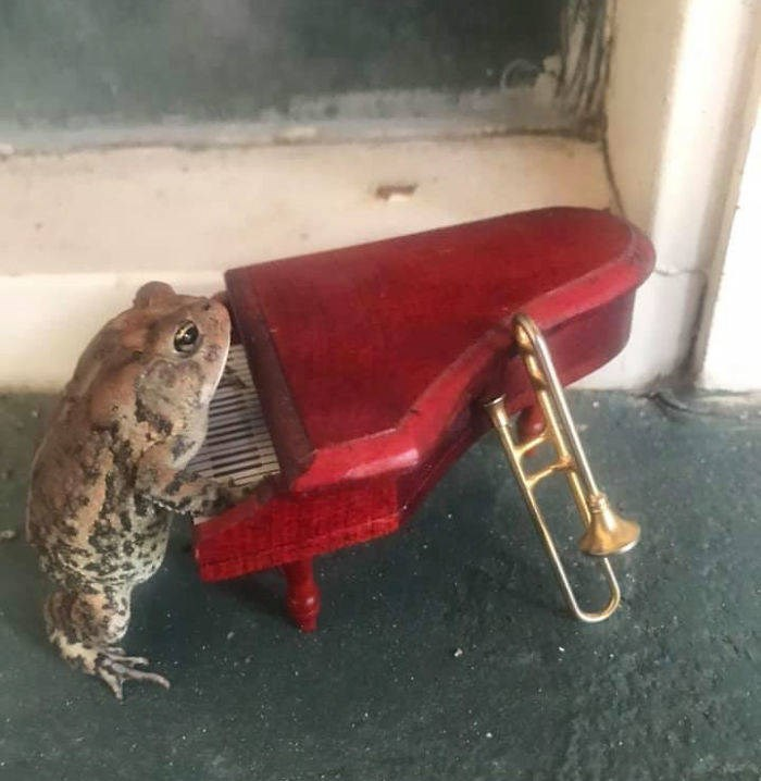 toad dollhouse - Toad