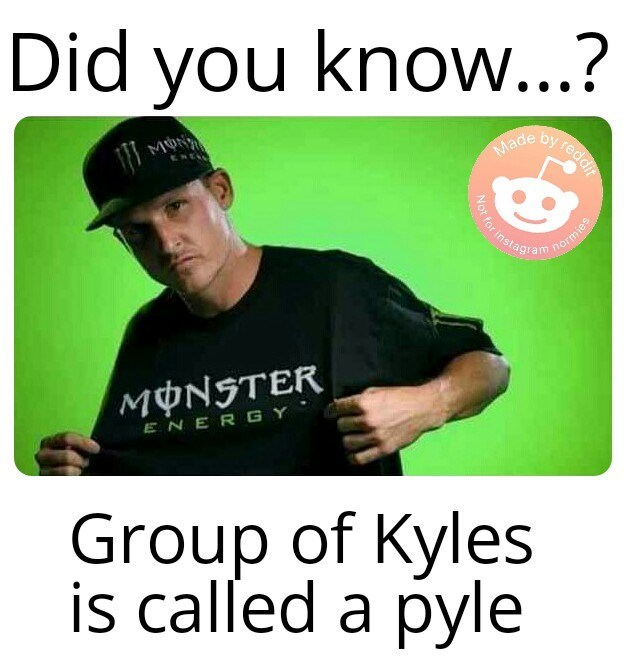 meme - Text - Did you know...? by redd Made ENEY Not for instagram normies ΜΦΝ7ΤER ENERGY Group of Kyles is called a pyle