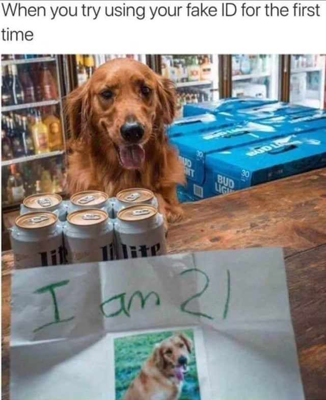meme - Dog - When you try using your fake ID for the first time BUD 30 MT BUD LIGH lite 21 1am
