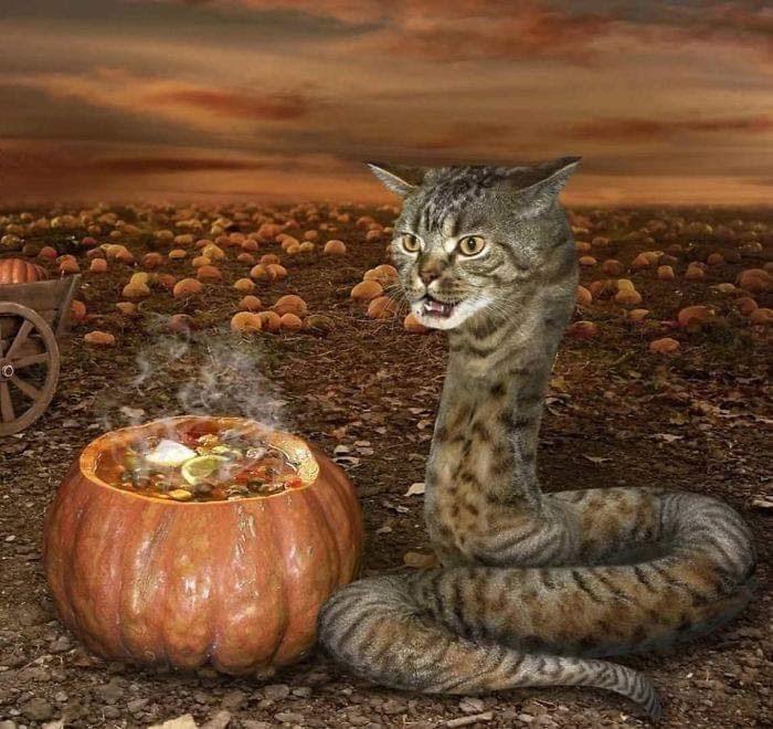 cursed image - Cat