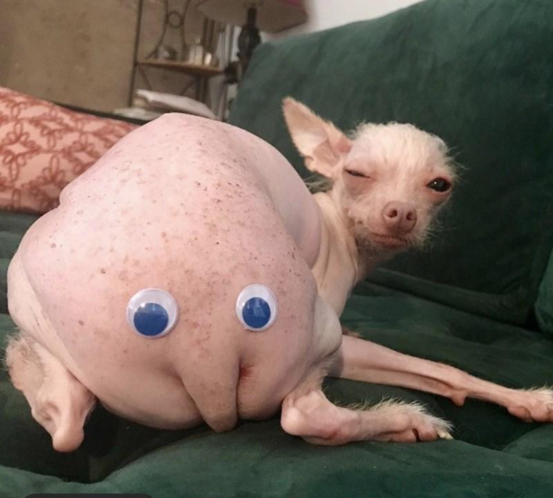 cursed image - Mammal