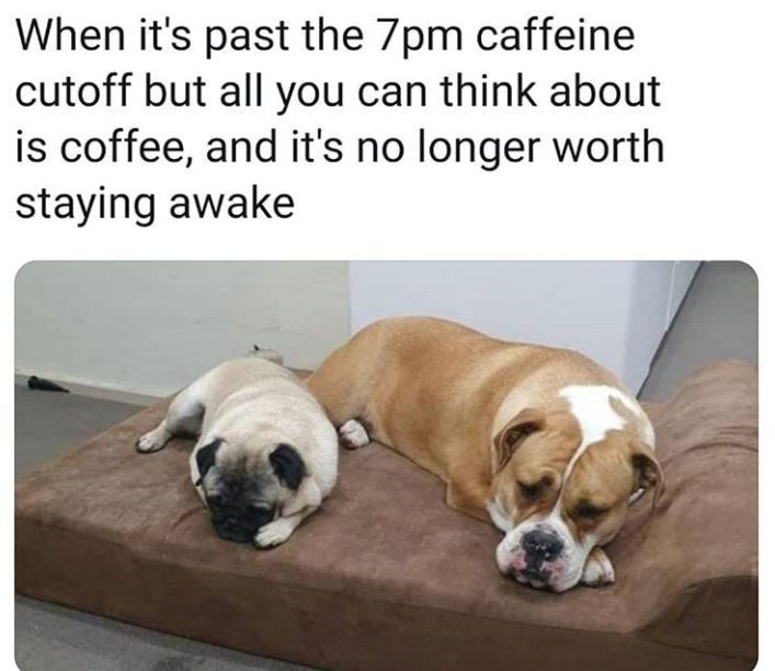 Dog breed - When it's past the 7pm caffeine cutoff but all you can think about is coffee, and it's no longer worth staying awake