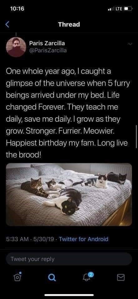 Text - 10:16 LTE Thread Paris Zarcilla @ParisZarcilla One whole year ago, I caught a glimpse of the universe when 5 furry beings arrived under my bed. Life changed Forever. They teach me daily, save me daily. I grow as they grow. Stronger. Furrier. Meowier. Happiest birthday my fam. Long live the brood! 5:33 AM 5/30/19 Twitter for Android Tweet your reply O