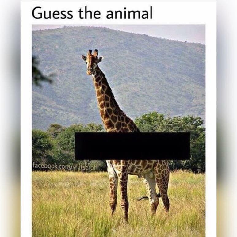 Giraffe - Guess the animal facebook.com/shitserol