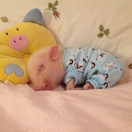 piglet - Child