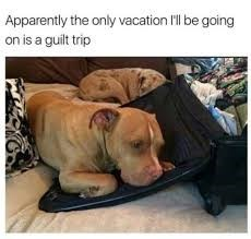 a dog leaning into the open lid of a suitcase looking sad travelling dog meme