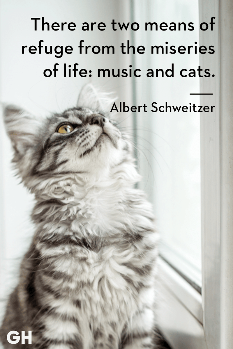 Cat - There are two means ot refuge from the miseries of life: music and cats. Albert Schweitzer GH