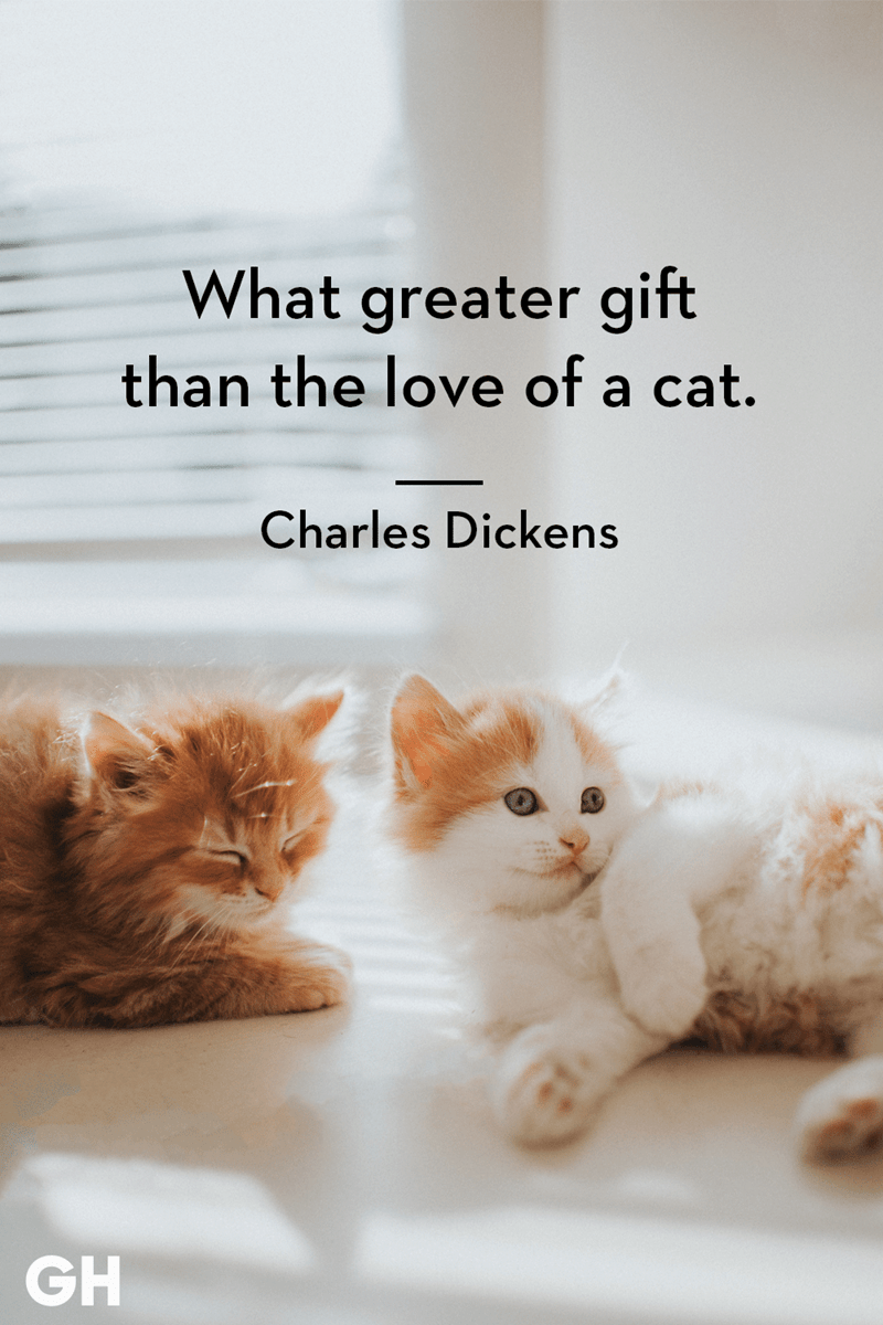 Cat - What greater gift than the love of a cat. Charles Dickens GH