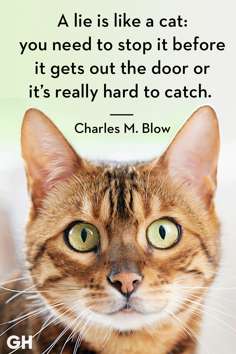 Cat - A lie is like a cat: you need to stop it before it gets out the door it's really hard to catch. Charles M. Blow GH