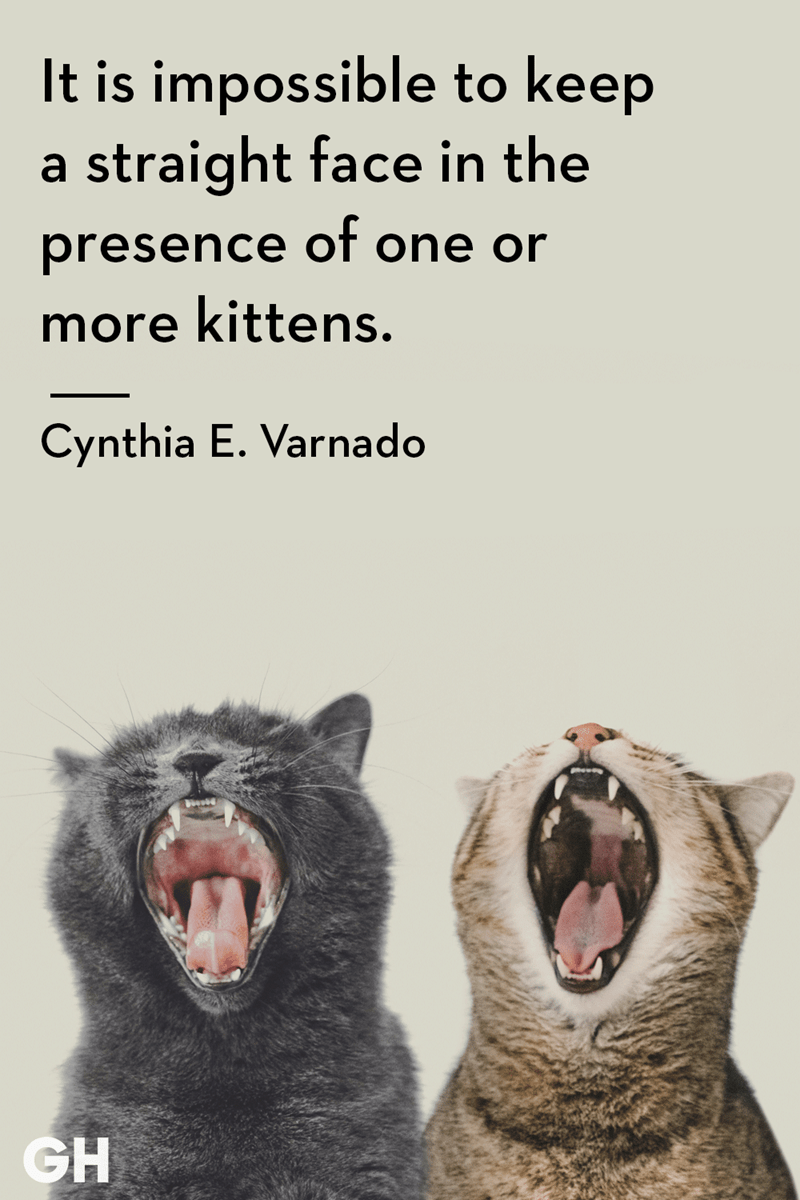 Facial expression - It is impossible to keep a straight face in the presence of one or more kittens. Cynthia E. Varnado GH