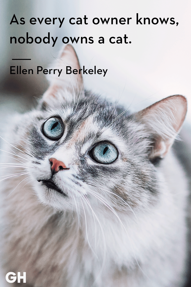Cat - As every cat owner knows, nobody Owns a cat. Ellen Perry Berkeley GH