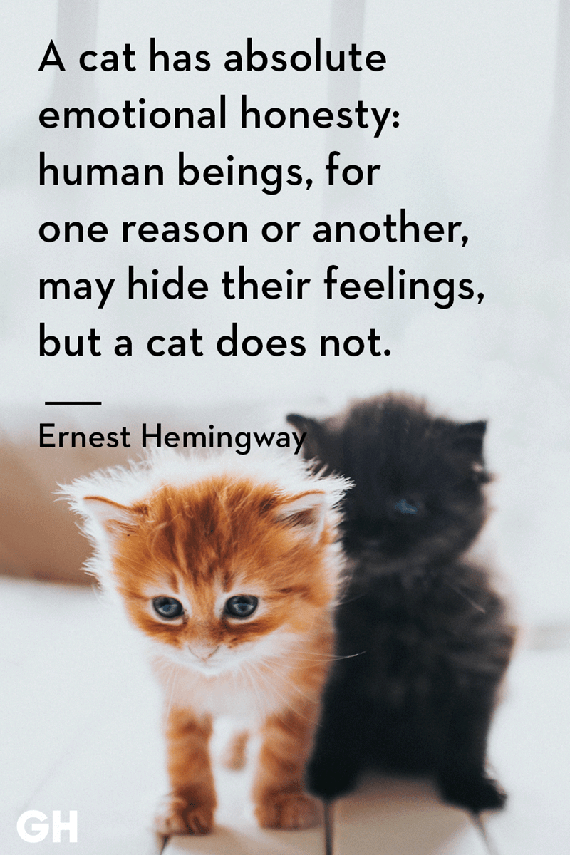 Cat - A cat has absolute emotional honesty: human beings, for one reason or another, may hide their feelings, but a cat does not. Ernest Hemingway GH