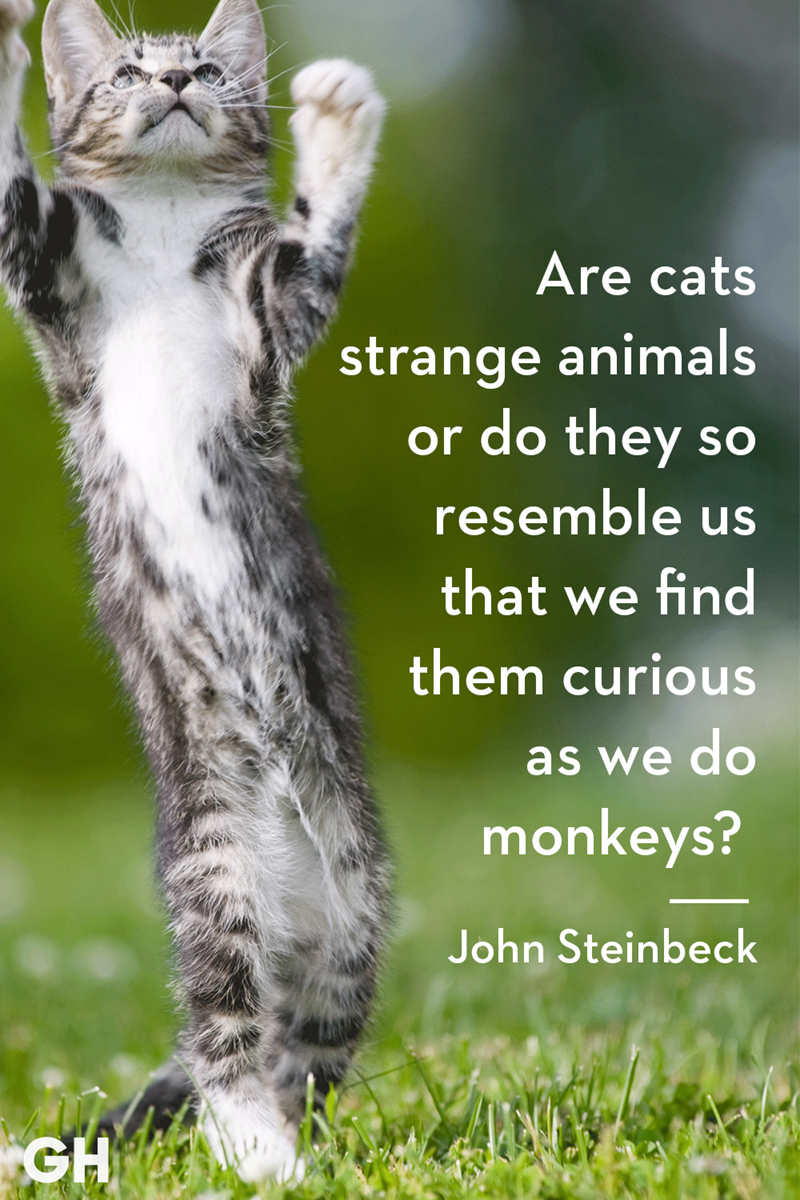 Cat - Are cats strange animals or do they SO resemble that we find them curious as we do monkeys? John Steinbeck GH