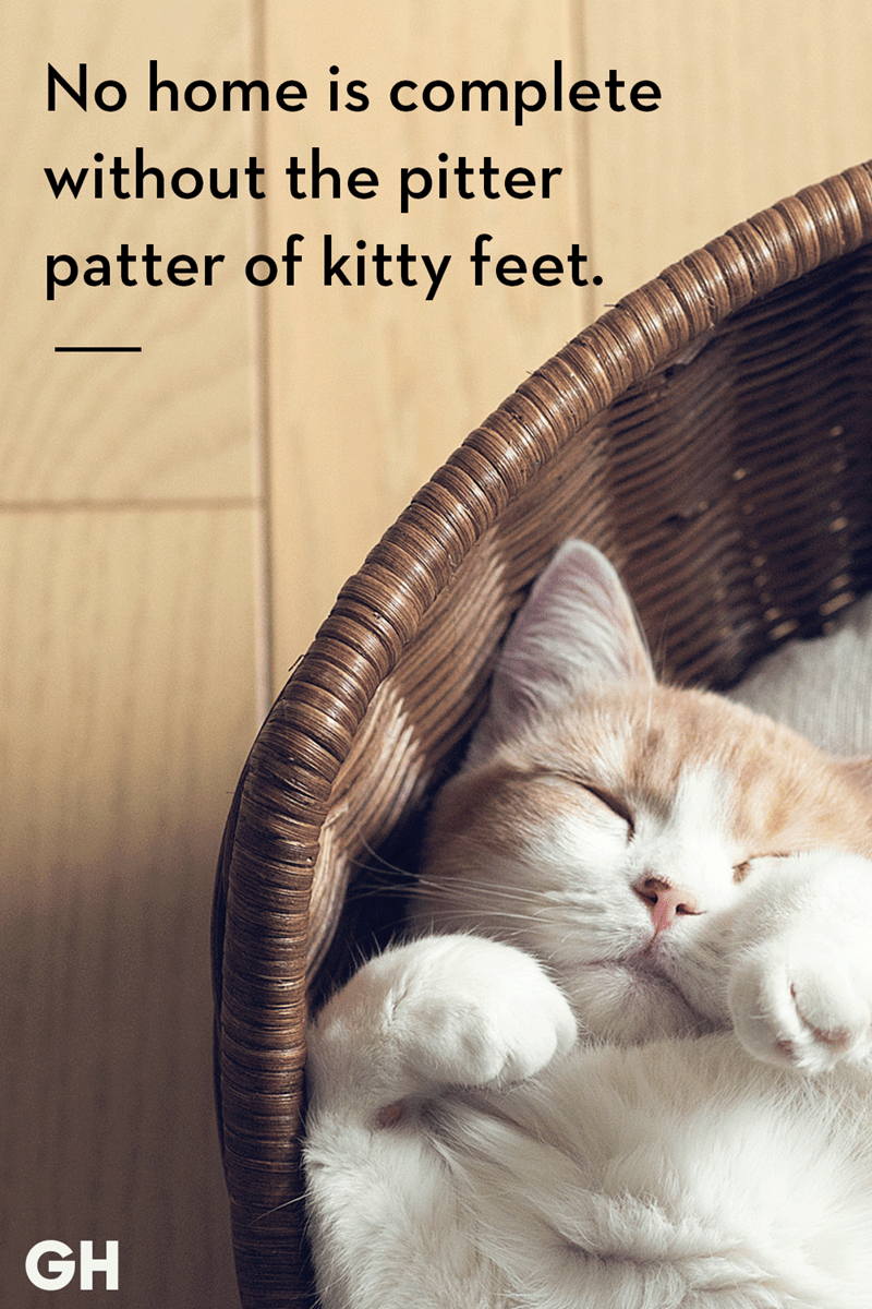Cat - No home is complete without the pitter patter of kitty feet. GH