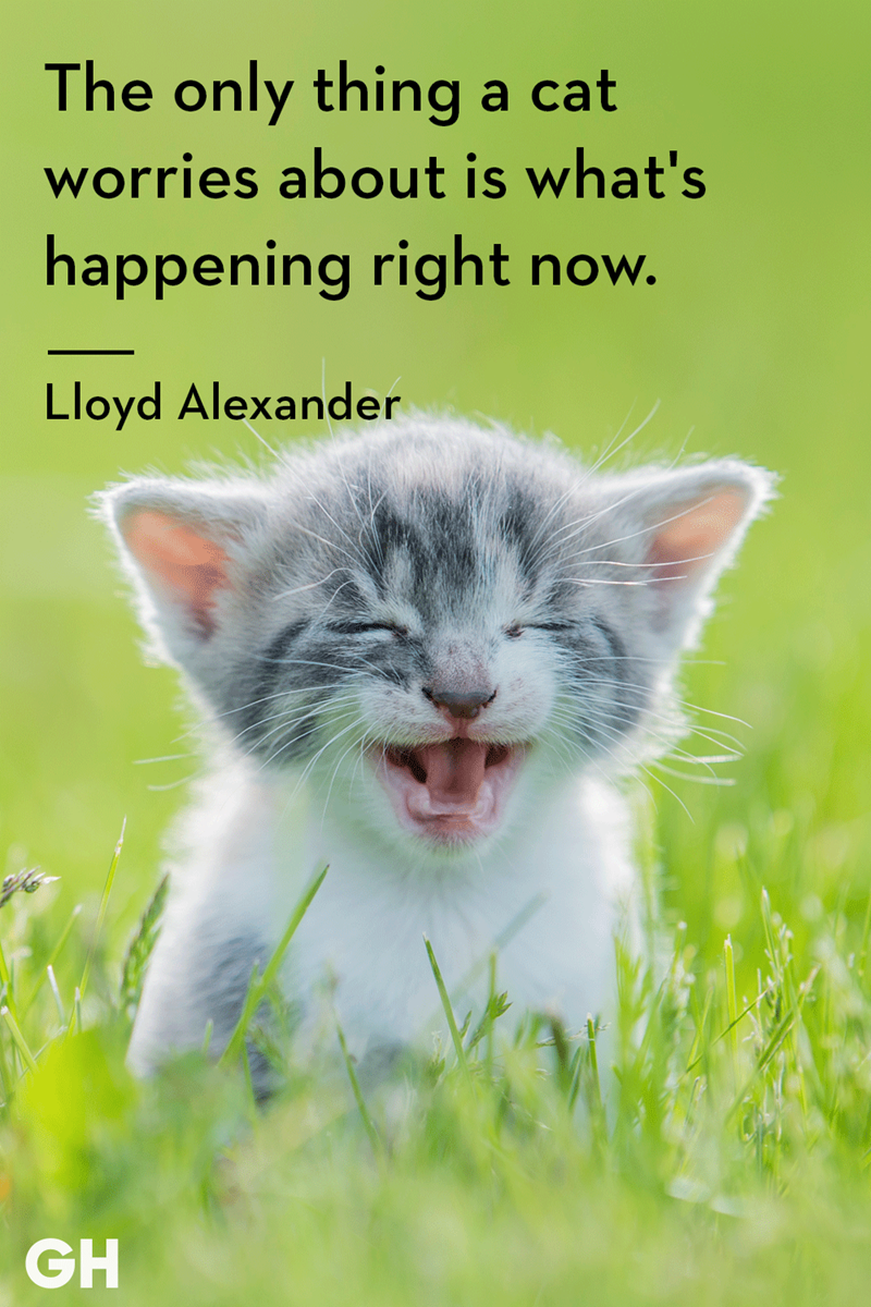 Cat - The only thing a cat worries about is what's happening right now. Lloyd Alexander GH