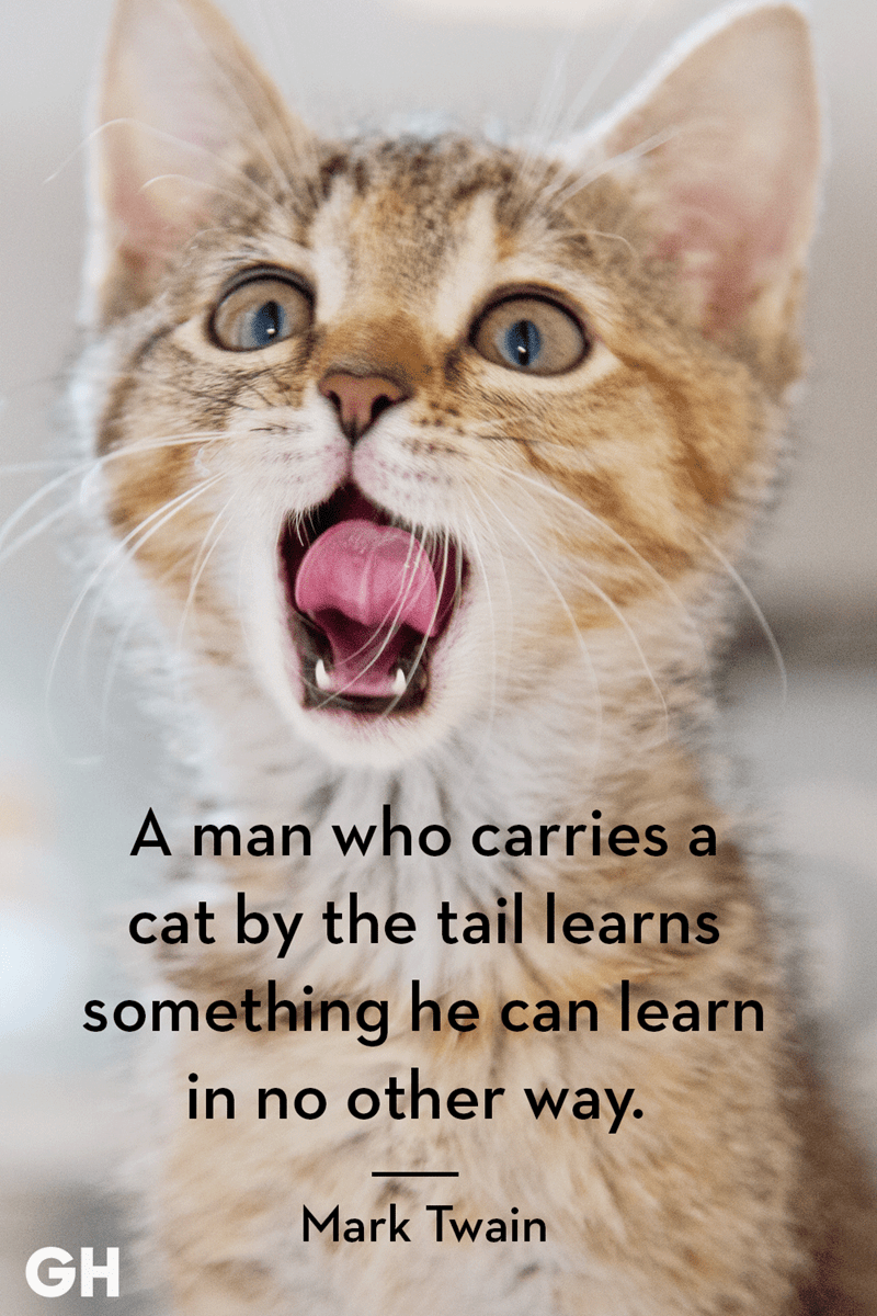 Cat - A man who carries a cat by the tail learns something he can learn in no other way. Mark Twain GH