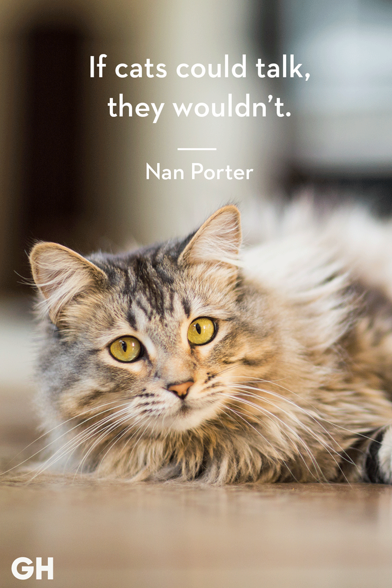 Cat - If cats could talk, they wouldn't. Nan Porter GH