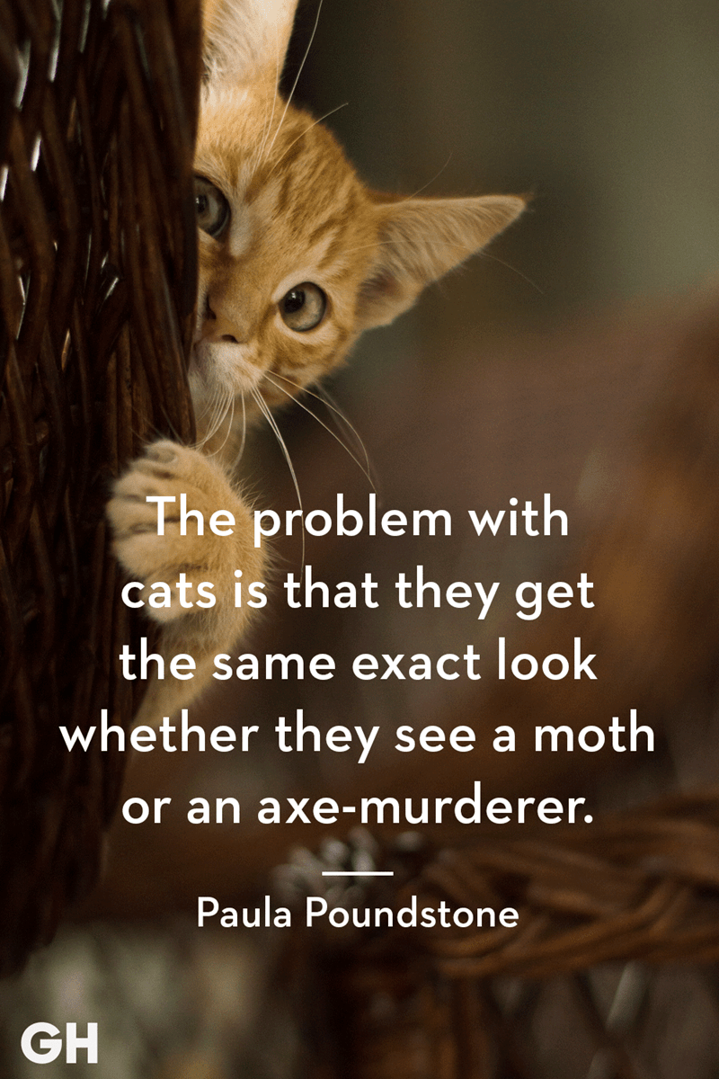 Cat - The problem with cats is that they get the same exact look whether they see a moth or an axe-murderer. Paula Poundstone GH