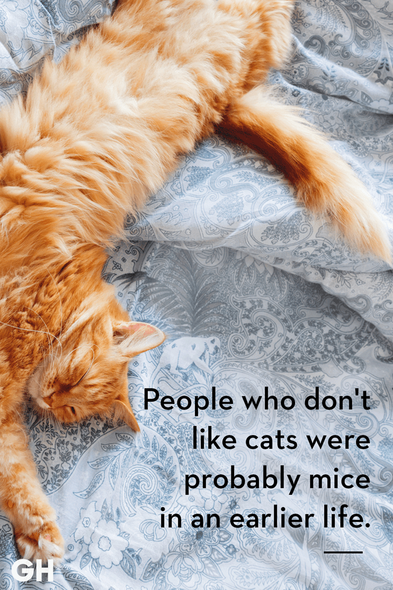 Cat - People who don't like cats were probably mice in an earlier life. GH
