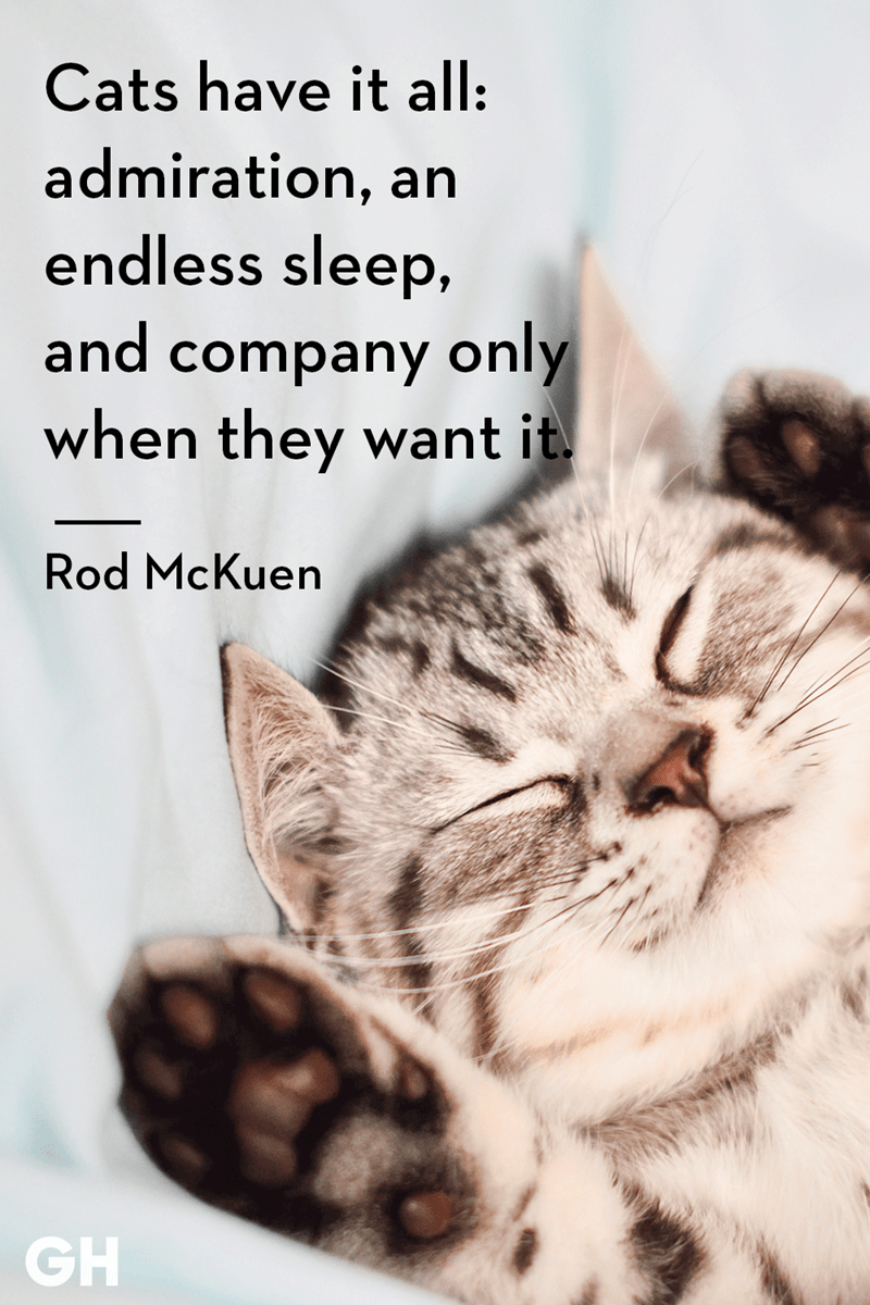 Cat - Cats have it all: admiration, an endless sleep, and company only when they want it. Rod McKuen GH