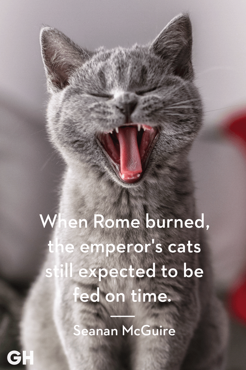 Cat - When Rome burned, the emperor's cats still expected to be fed on time. Seanan McGuire GH