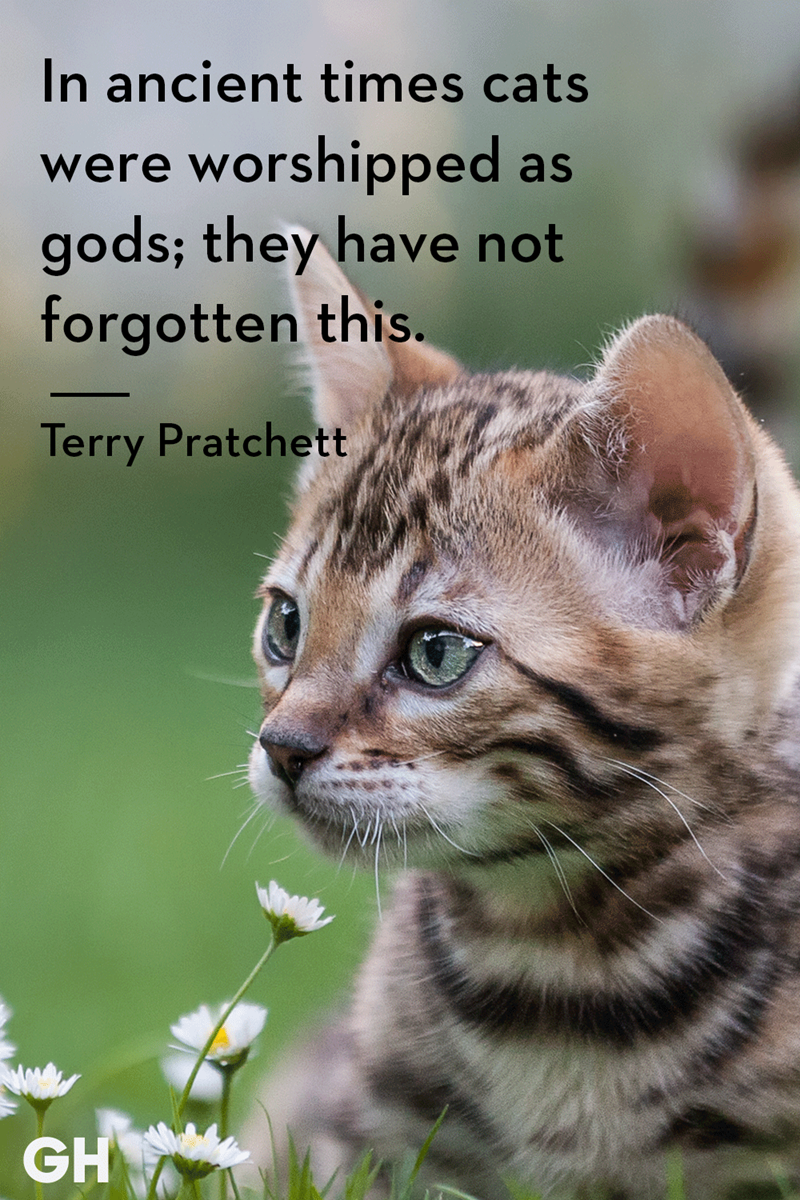 Cat - In ancient times cats were worshipped as gods; they have not forgotten this. Terry Pratchett GH
