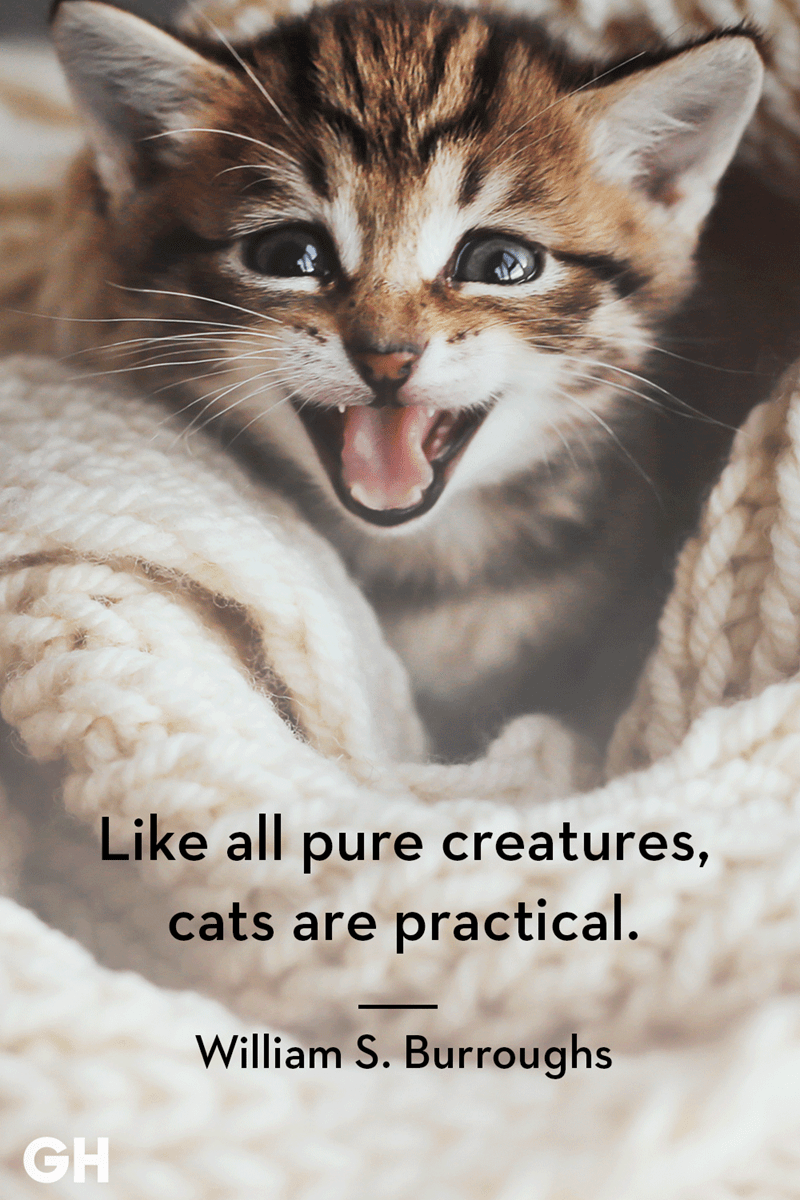 Cat - Like all pure creatures, cats are practical. William S. Burroughs GH